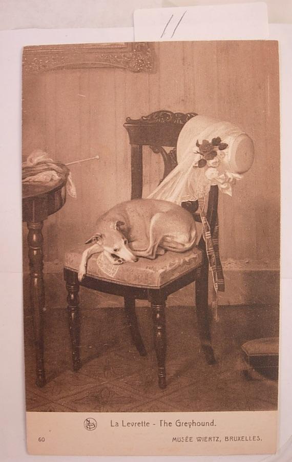 Vintage Animal Postcard of a Greyhound musee wiertz bruxelles