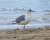 """Nature / Beach Photography - Seagull on the Beach with Sand/Ocean Background Art Print Wall Decor - 8x10 Photograph, """"Peaceful Day"""""""