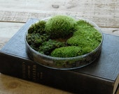 Moss Petri Dish Terrarium - Science Gift for Men & Women, Spring Nature Decor, Easter Gift for Gardeners - Vertegris