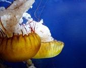 Jellyfish, 12x18 Photographic Print