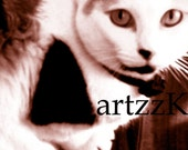 Duotone Digital Photography CAT Image - ART Photograph