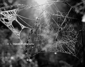 Spider Web Dreamcather 20 X 16 Metal Print