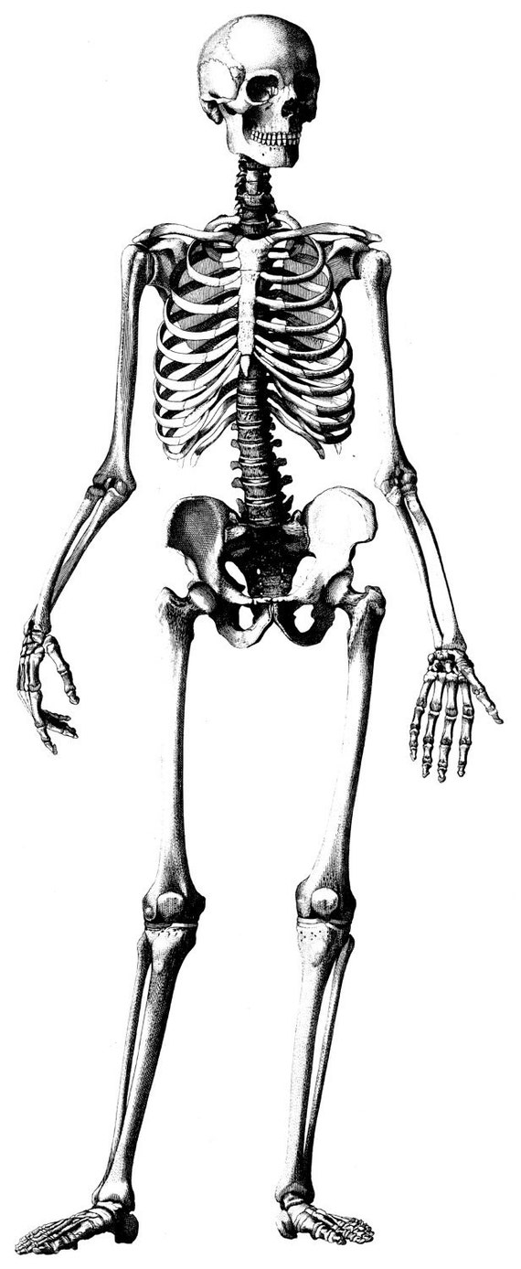 Human Anatomy Old medical atlas illustration Digital Image