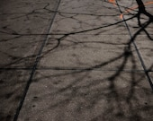 The Universe Expressed as Afternoon Sidewalk Shadows
