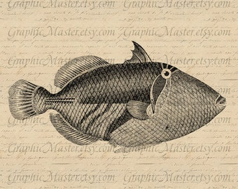 Antique Fish PNG JPEG Ocean Sea Life Instant Download Digital Image Iron On Transfer Clothing Tote Bags Pillows Supplies Towels Marine 10