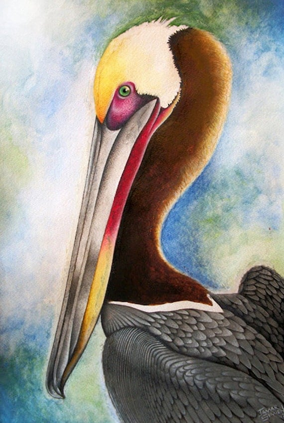 Original watercolor pelican painting- fine art print- 8 x 10- Bird watercolor painting giclee- FREE SHIPPING