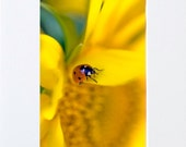 Fine Art Print 8x10 Matted Titled - Traveling Lady Bug