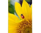 Fine Art Print 8x10 Matted Titled - Traveling Lady Bug (Ladybug series)