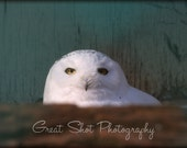Snowy Owl, Artic Owl, Great White Owl,  Photo Print, Owl Photography