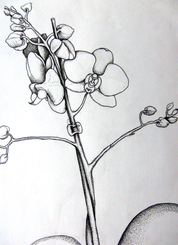 Orchid Line Drawings Original Drawing Line Drawing