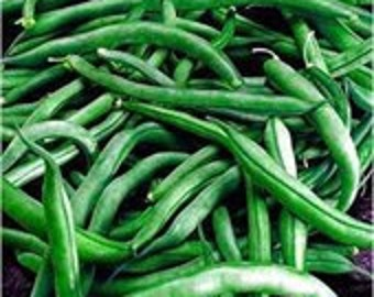 Bush Bean Jade, Easy to Grow, Canners, Fast Grower, 25 Seeds