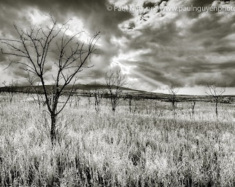Dead Trees black and white photograph print, 8x12 print matted on black 12x16 mat.  Molokai, Hawaii, dead trees in grass field