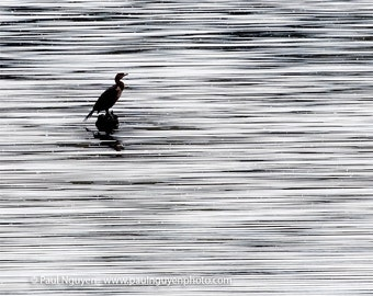Bird on Lake photograph, 8x10 METALLIC print matted on black 11x14 mat.  Cormorant perched on rock on shimmering lake surface