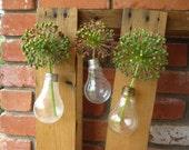 Upcycled Hanging Bulb Vase Trio