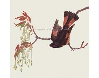 American Redstart Bird Fabric Block - Repro from Prang 1889 Image