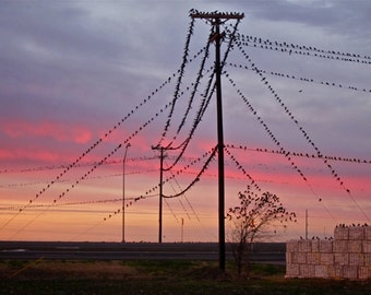 Grackles on telephone wire at sunrise  8X10 PHOTOGRAPH