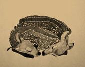 sleep tightly deer print 8x10