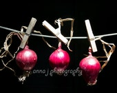 Onions - Photography - Shabby Chic Home Cottage Kitchen and Restaurant Wall Decor - Poster on canvas
