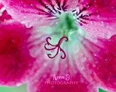 Pink Flower Macro Photography - Canvas - Shabby Chic - Ideal as Home, Nursery, Girls Room, Studio, Loft, Atelier and Shop wall decor.