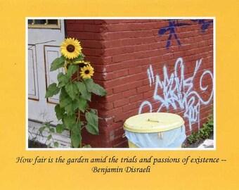 Benjamin Disraeli quote - photo card
