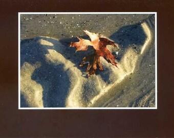 Autumn leaf on beach - photo card