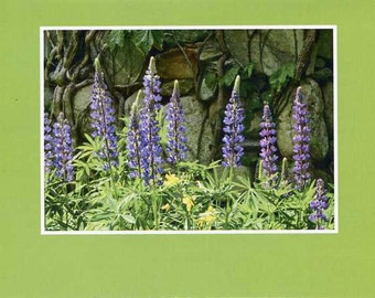 Lupine against stone chimney- photo card