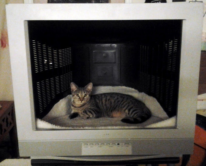 Great Repurposed Television Pet Bed