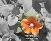 Hidden Bloom