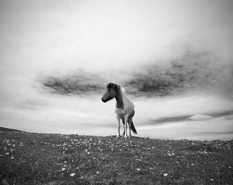 Horse photo, black and white or color, fine art photo print, home decor, animal photo, choice of sizes