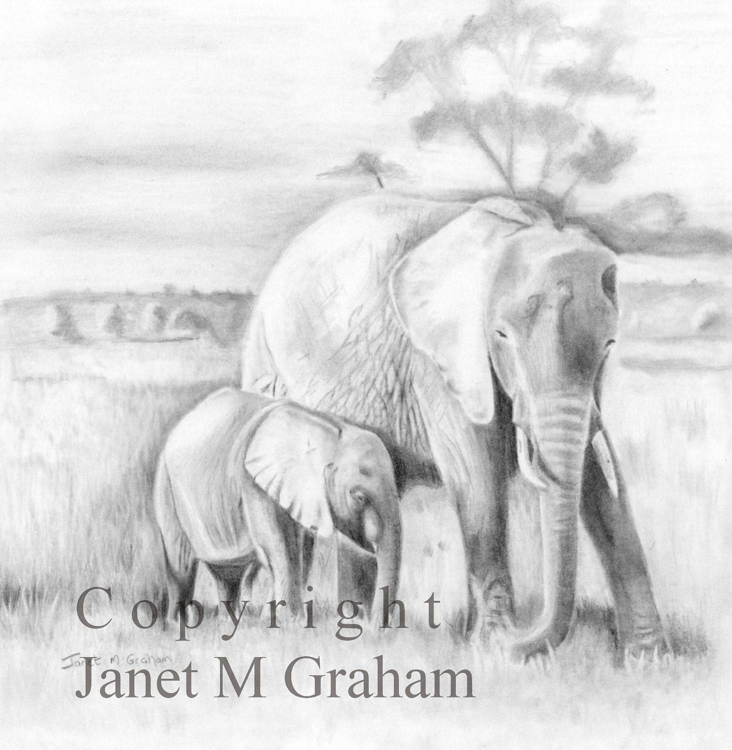 Pencil Drawings Of Baby Elephants Lean on me mom and babyPencil Drawings Of Baby Elephants