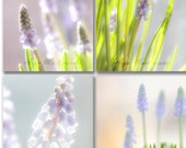 Floral home decor, Muscari light game photography, bright  shabby chic pink red  flowers,  8x8 ,6x6, 5x5, 4x4 inch    4 set