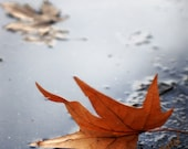 Fall Leaf  in Puddle Photo Art 8x12 Print - itspicturesque