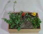 Cactus & Succulent Arrangement - Wine Box No. 3