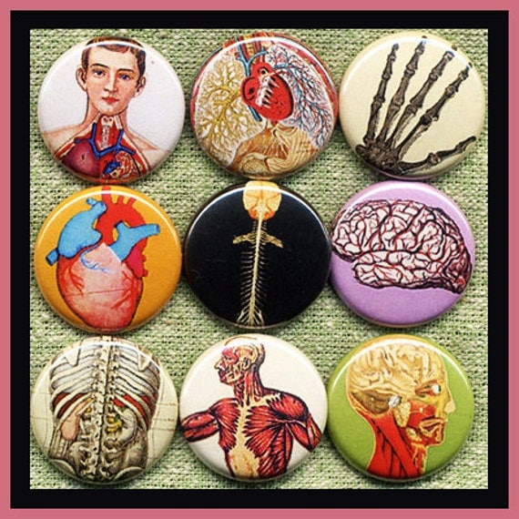 """9 LOVE the human ANATOMY 1"""" inch buttons, medallions or magnets SET A"""