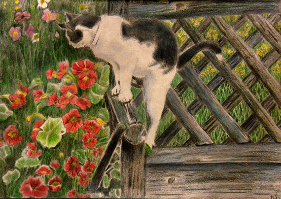 Cat in Summer Garden Colored Pencil Print
