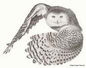 Snowy Owl- Giclée Print