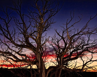 "Landscape Sunset Photograph Print  ""The Tree at Sunset"" 8x10 Fine Art Photography, New Mexico Silhouette Photo"
