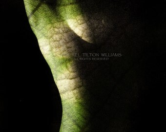 Leaf Torso,  Ultrachrome K3 Archival Print. Signed and Dated