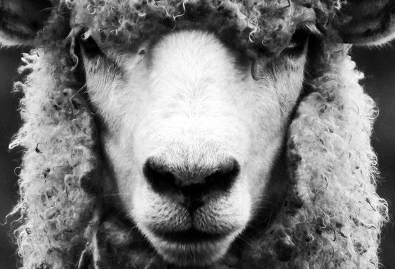 Sheep Portrait - cropped (large size)