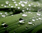"Rain drops, 7"" x 5"" print, fine art photography, dark green, nature, leaves raindrops"