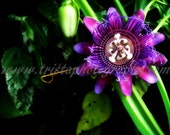 Purple passion flower print - FREE SHIPPING