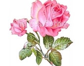 CHARMING PINK CABBAGE RoSES DECALs CoTTAGE  shabby TRANSFERs chic create your own art
