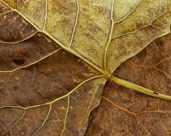 The Passage 13 x 20 Zen abstract photograph of leaves