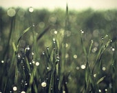 Photograph of Water Drops on the Grass. Refreshing Fine Art Print, Ideal for Wall Art. Green Tones. 8x8 inch, cca 20x20cm