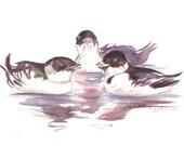 Bird Art  Auk Talk Original Watercolor with Mat Black and White Home Decor Sea Bird Conversation