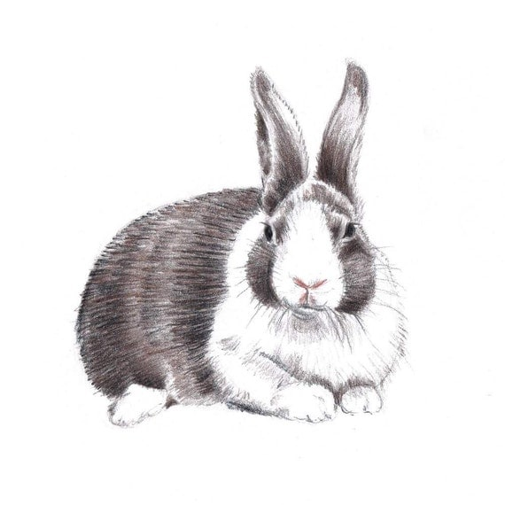 Rabbit Drawing Original Colored Pencil Art Bunny Brown and White Hare Art Nursery Decor Home Decor