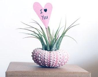 i love you // air plant garden