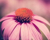 flower photography, pink home decor, nature photography, pink wall art, coneflower photograph