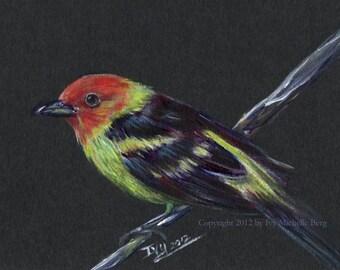 Western Tanager, Original Acrylic Bird Painting