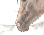 Original  Watercolor Painting - Horse Art - Spanish